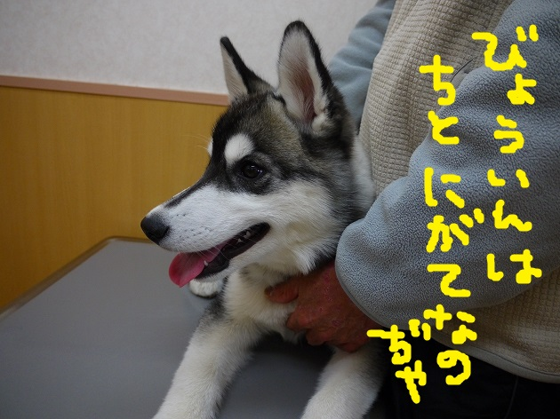 P1460770.jpg