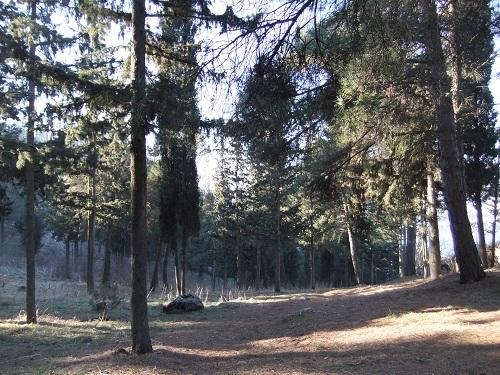 カストリア_カストロ付近は林
