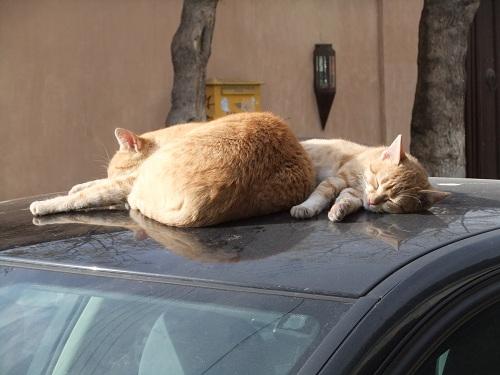 カヴァラの猫さん