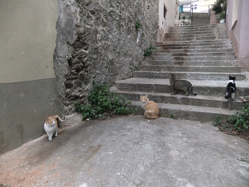 カヴァラの猫さん (4)