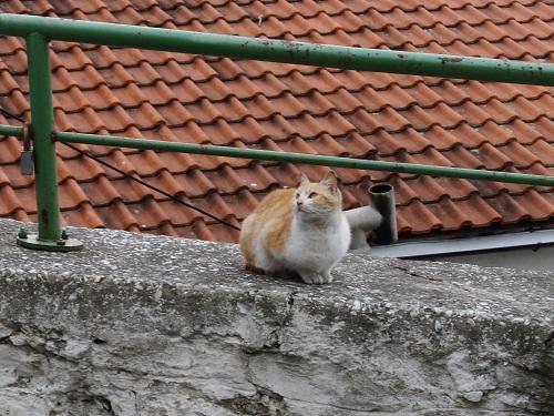 カヴァラの猫さん (1)