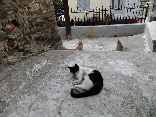 カヴァラの猫さん (3)