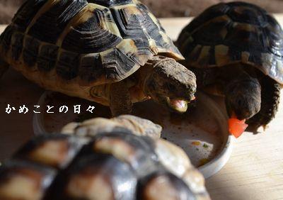 DSC_0100-riku.jpg