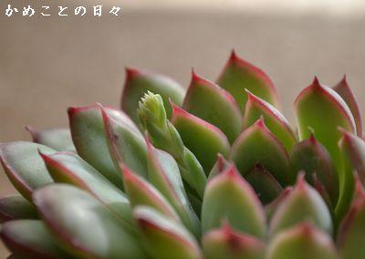 DSC_0136-ta.jpg