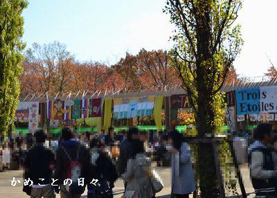 DSC_0210-gai.jpg