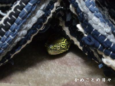 DSC_0219-suke.jpg
