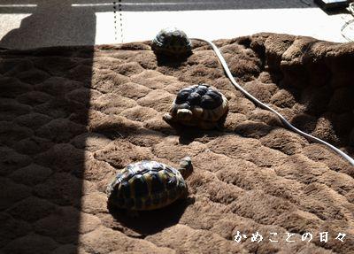 DSC_0395-riku.jpg