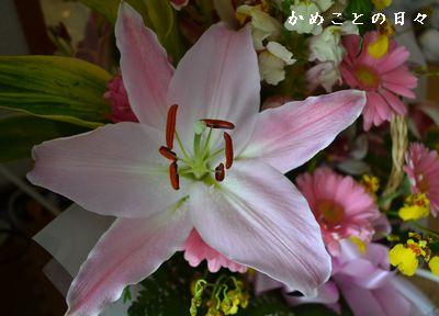 DSC_0448yuri.jpg