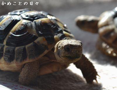 DSC_0651-fu.jpg