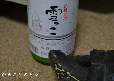 DSC_0658-yuki.jpg