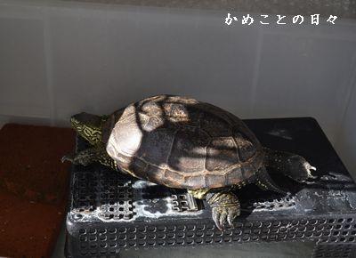 DSC_0669-suke.jpg