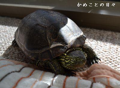 DSC_0848-suke.jpg