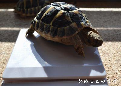 DSC_0878-fu.jpg