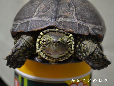 DSC_0879-suke.jpg