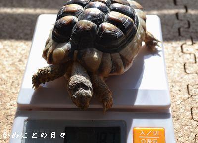 DSC_0883-maru.jpg