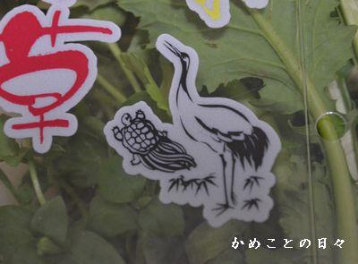 DSC_0908-kame.jpg