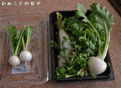 DSC_0911-nana.jpg