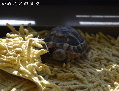 DSC_0913-qu.jpg