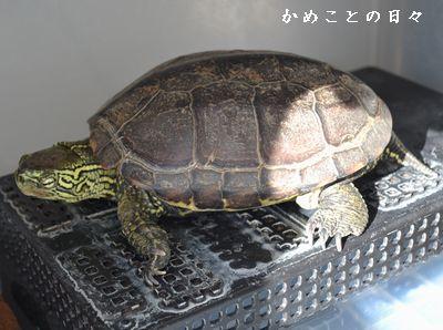 DSC_0919-suke.jpg