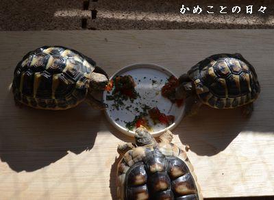 DSC_0940-riku.jpg