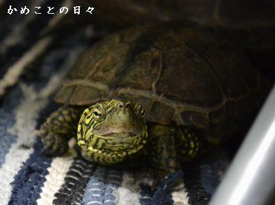 DSC_0960-suke.jpg
