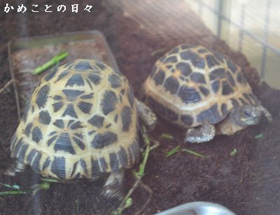 DSC_0974-kumo.jpg