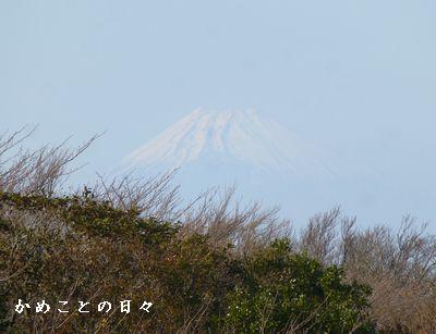 P1080906-fuji.jpg