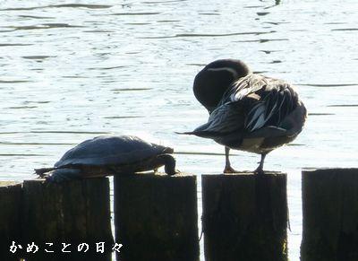 P1090946-kame.jpg