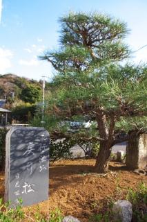 江島道:現在の西行戻り松