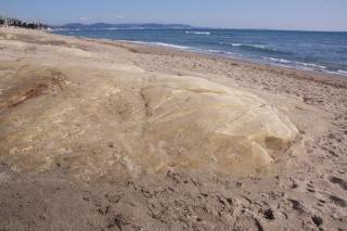 江島道:七里ヶ浜に埋まる岩塊