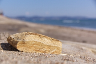 江島道:七里ヶ浜に落ちている石の断面
