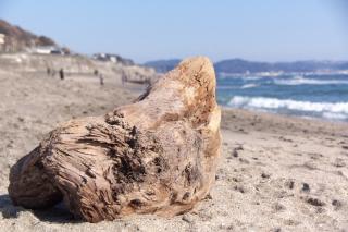 江島道:七里ヶ浜に流れ着いた流木