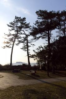 江島道:稲村ガ崎公園の木立の間から江の島を望む