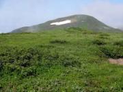 東焼石周辺のお花畑から焼石岳を望む