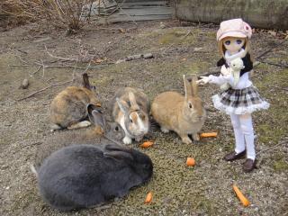 ウサギ島201202-06
