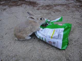 ウサギ島201202-36
