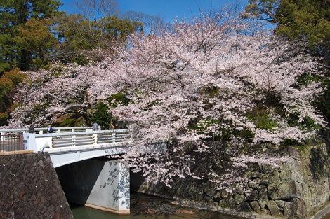 E-PL1サンプル画像(駿府公園の桜)