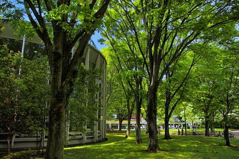 新緑に包まれる城北公園