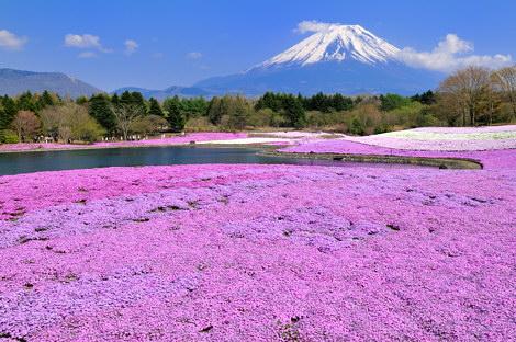 富士芝桜まつりその2
