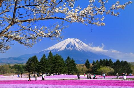 富士芝桜まつりその4