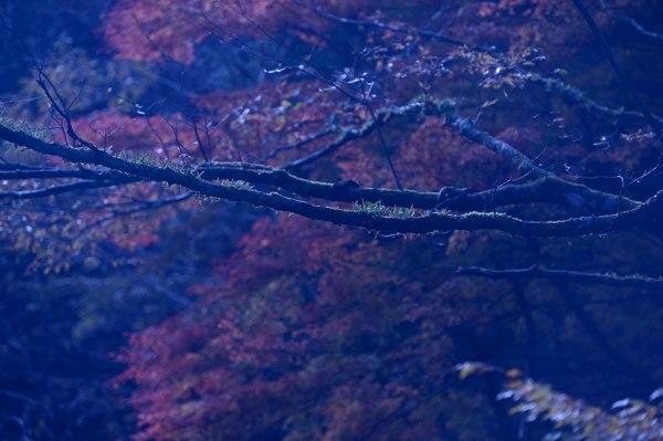 2012112905.jpg