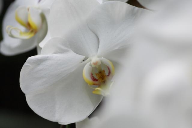 20110103-002.jpg