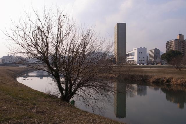 20110203-003.jpg