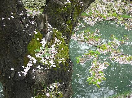 弘前公園さくらまつり-4