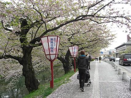 弘前公園さくらまつり-5