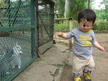 芦野公園 息子くんとウサギ-2