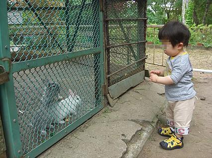 芦野公園 息子くんとウサギ-3