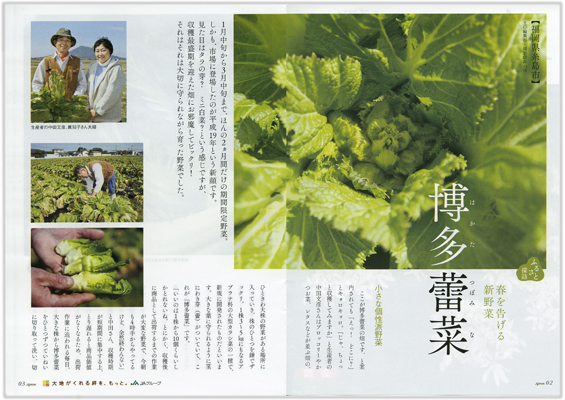 全農エプロン12年2月号「博多蕾菜」