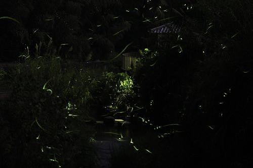 闇夜に描くホタルの飛行線