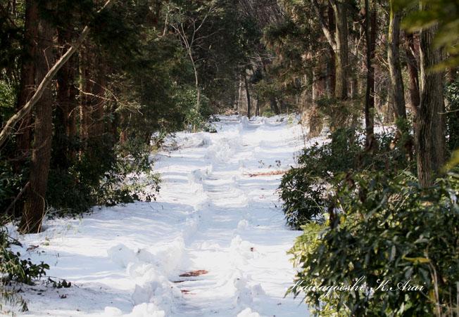 積雪の森道